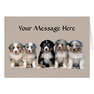 Australian Shepherd Puppies Greeting Card