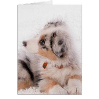 Australian shepherd puppy card