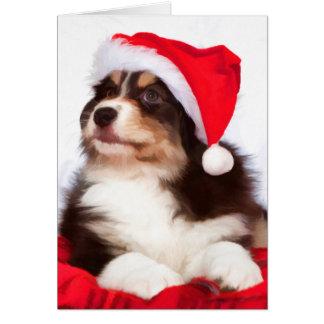 Australian Shepherd Puppy Christmas Greeting Cards