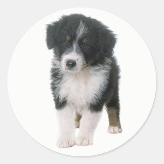 Australian Shepherd Puppy Dog Love Aussie Classic Round Sticker