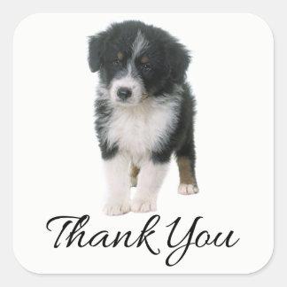 Australian Shepherd Puppy Dog Thank You - Aussie Square Sticker