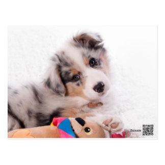 Australian shepherd puppy postcard
