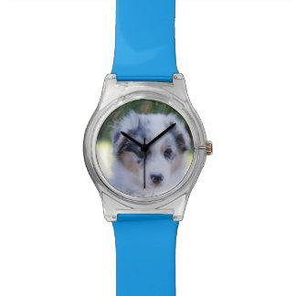 Australian shepherd puppy wrist watch