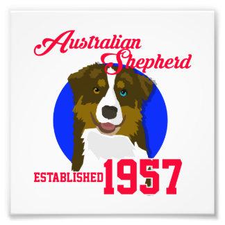 Australian Shepherd Since 1957 Photographic Print