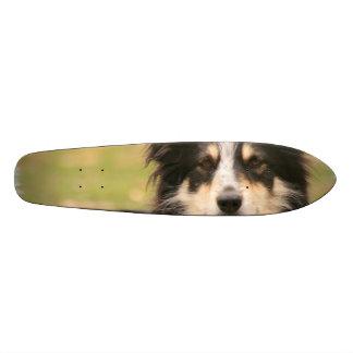 Australian Shepherd Skate Boards