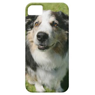 Australian Shepherd smiling at camera iPhone 5 Covers