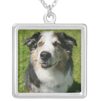 Australian Shepherd smiling at camera Silver Plated Necklace
