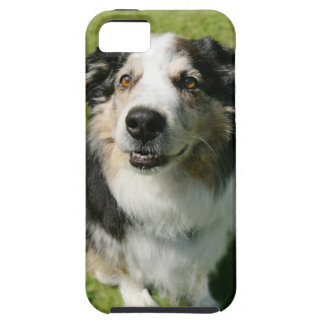 Australian Shepherd smiling at camera Tough iPhone 5 Case