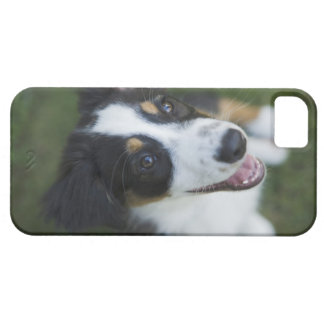 Australian Shepherd standing on hind legs Barely There iPhone 5 Case
