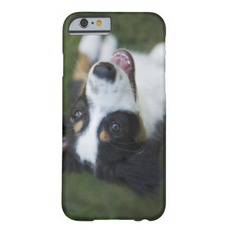 Australian Shepherd standing on hind legs Barely There iPhone 6 Case