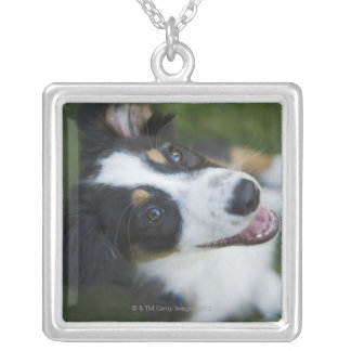 Australian Shepherd standing on hind legs Silver Plated Necklace