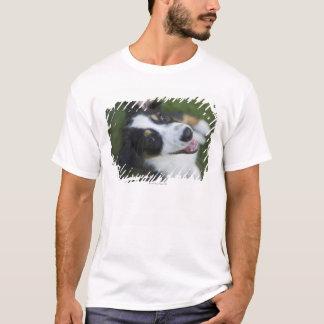Australian Shepherd standing on hind legs T-Shirt