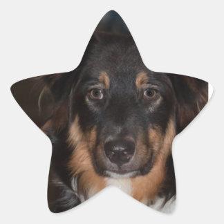 Australian Shepherd Star Sticker