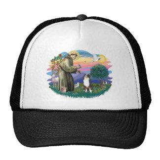 Australian Shepherd (tri) Hat