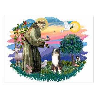 Australian Shepherd (tri) Postcard