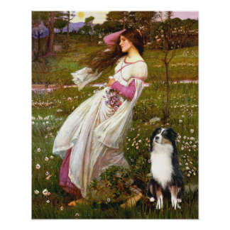 Australian Shepherd (Tri) - Windflowers Posters