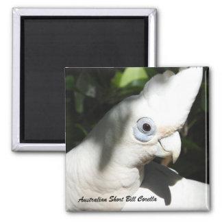 Australian Short Bill Corella Magnet