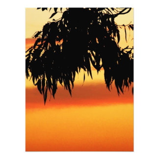 Australian Silhouette Sunset Photo
