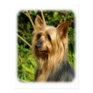 Australian Silky Terrier design Postcard