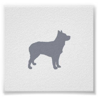 australian stumpy tail cattle dog silo blue.png poster