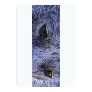australian stumpy tailed cattle dog blue merle eye 13 cm x 18 cm invitation card