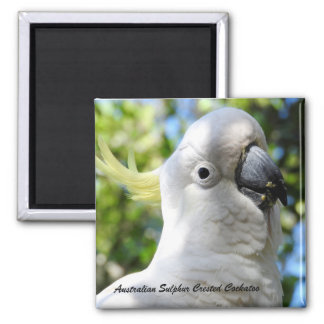 Australian Sulphur Crested Cockatoo Magnet