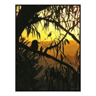 Australian Sunset Kookaburra Silhouette Photo