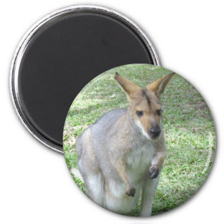 Australian Wallaby Magnet