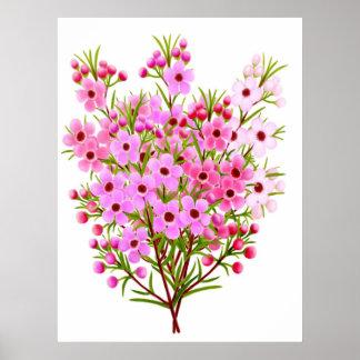 Australian Waxflower Bouquet Poster