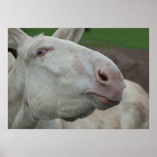 Austria-Hungarian White Donkey Print