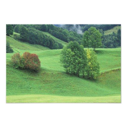 Austria. Rolling green hillside and trees Art Photo