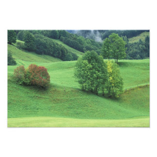 Austria. Rolling green hillside and trees Photograph