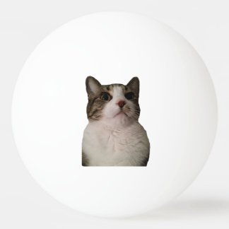 Authentic Cat Ball