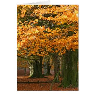 Autum beech trees card
