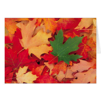 autumn (15) card