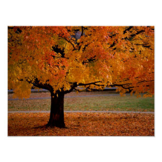 autumn (1) poster