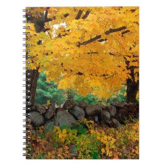 Autumn A Golden Season In New England Journal