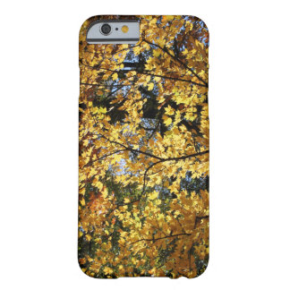 Autumn Afternoon Barely There iPhone 6 Case