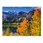 Autumn around June Lake, California Postcard