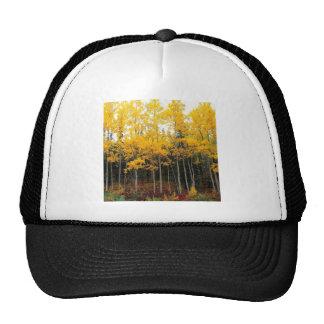 Autumn Aspen And Birch Denali Alaska Trucker Hats