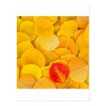 Autumn Aspen Leaves Eastern Sierra California Post Cards