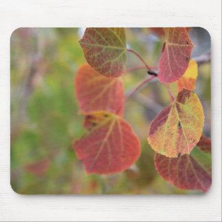 Autumn Aspen Leaves One Mouse Pad