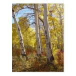 Autumn Aspen Postcard