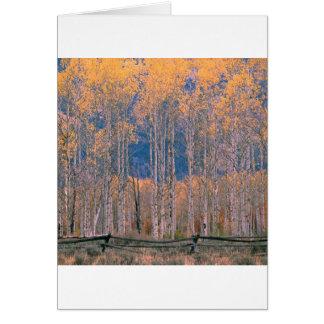 Autumn Aspen Splendor Jackson Hole Wyoming Cards