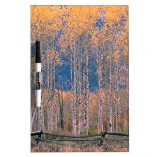 Autumn Aspen Splendor Jackson Hole Wyoming Dry-Erase Board