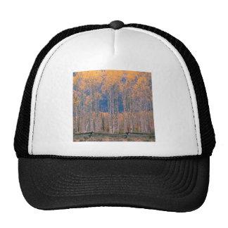 Autumn Aspen Splendor Jackson Hole Wyoming Trucker Hats