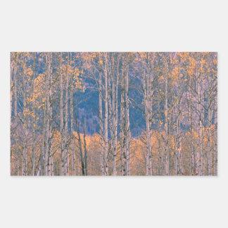 Autumn Aspen Splendor Jackson Hole Wyoming Stickers