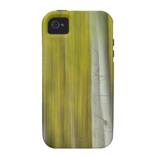 Autumn Aspen Tree Trunks In Their Glory Dreaming iPhone 4/4S Covers