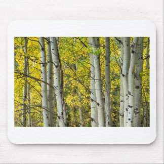 Autumn Aspen Tree Trunks In Their Glory Mouse Pads