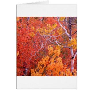 Autumn Aspen Trees City Of Rocks Idaho Card